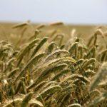 Lombardia: bando per il Programma di Sviluppo Rurale